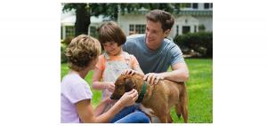 pet-safety-300x142 pet-safety